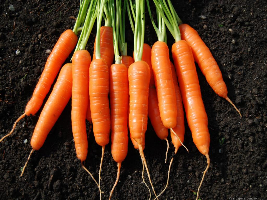 4107017-carrots-wallpapers
