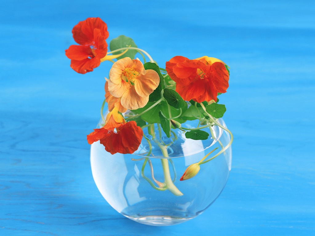 renatures.com-flowers-posies-vases-edible-turquoise-plants-nasturtiums-bright-colours-herbs-glass-amazing-flower-hd-wallpaper