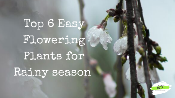 Top 6 easy Flowering plants for Rainy season in India