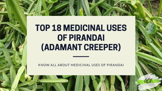 Top 18 Medicinal Uses of Pirandai(Adamant Creeper)