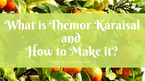 What is Thermor Karaisal and How to make it?